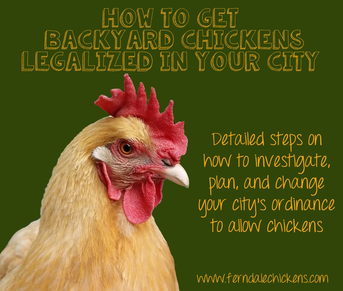 how to get backyard chickens legalized in your city ferndale