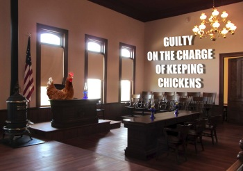 garden city mi man found guilty on criminal charge of keeping backyard chickens