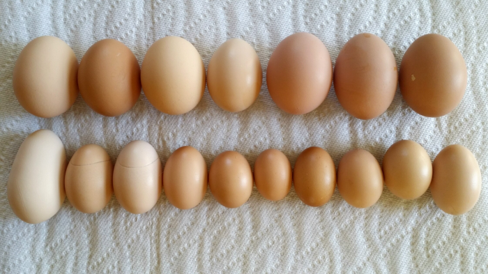 strange chicken eggs