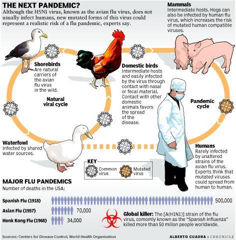 Bird-Flu-02