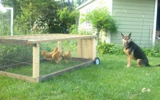 hurley-chicken-tractor