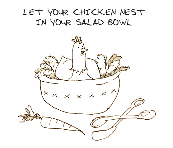 HOW-TO-GET-SALMONELLA-FROM-BACKYARD-CHICKENS-CDC